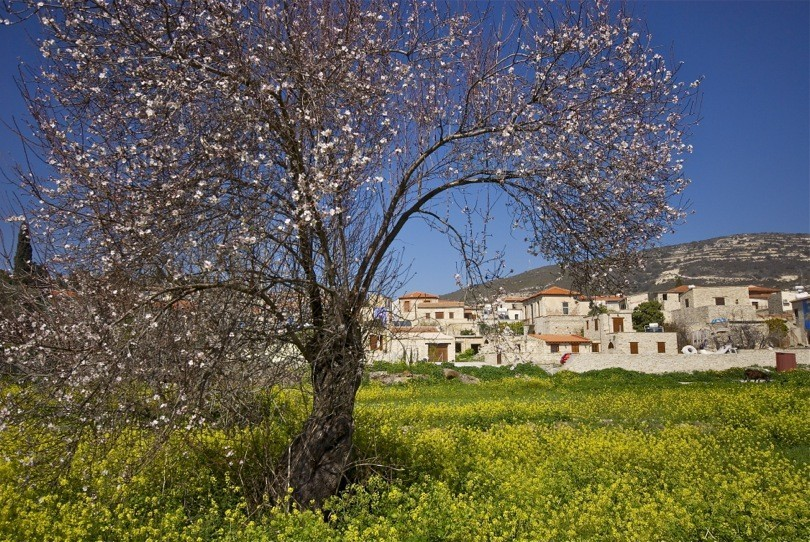 Kato Drys village Cyprus Europe